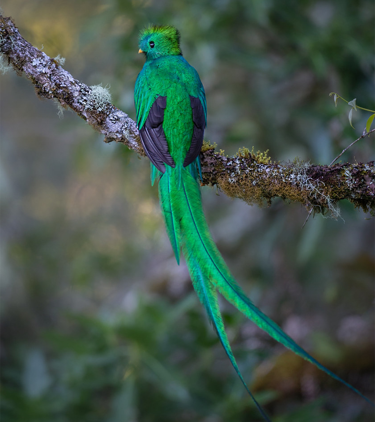 QUETZAL_foto-reference